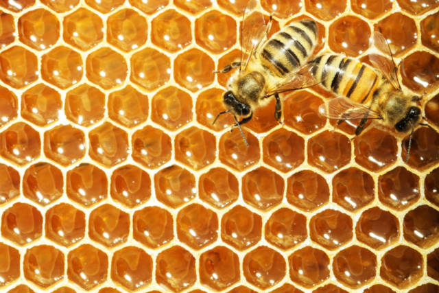 2 abejas en una colmena