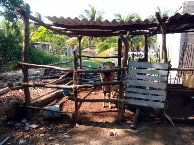 Se quejan de relleno de manglar en chuburna puerto.